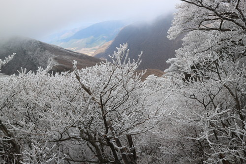 令和元年・大船山御池の霧氷に大感動!_e0272335_5404175.jpg