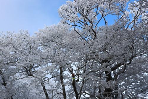 令和元年・大船山御池の霧氷に大感動!_e0272335_5452562.jpg