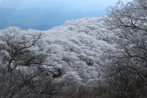 令和元年・大船山御池の霧氷に大感動!_e0272335_7243142.jpg