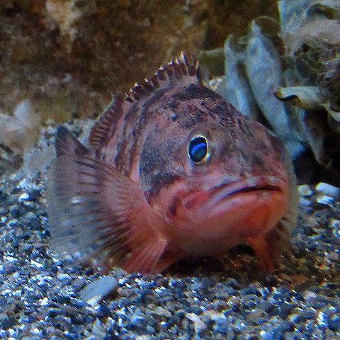 魚_b0035639_16255554.jpg