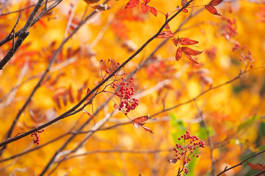 秋色重ね #3_c0067040_19530592.jpg