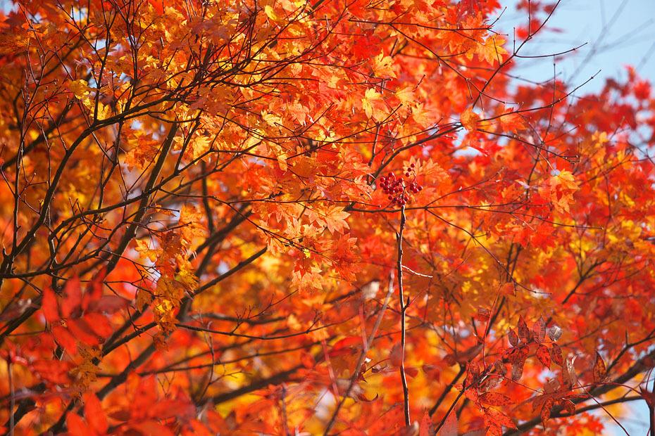 秋色重ね #3_c0067040_19542349.jpg
