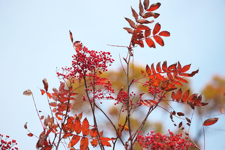 秋色重ね #3_c0067040_19543502.jpg