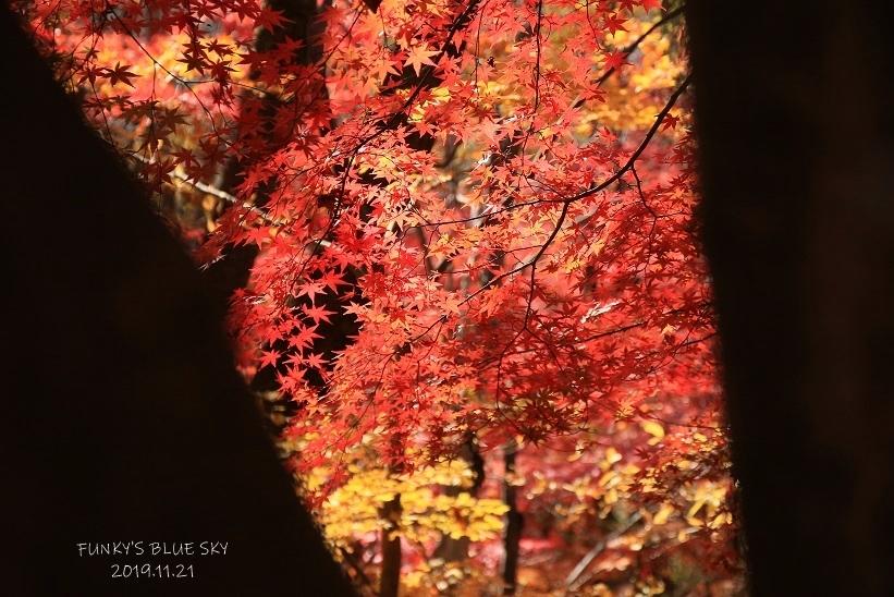 真っ赤な大もみじ*_c0145250_10580055.jpg