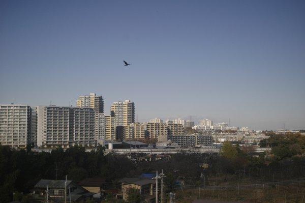 黒川土地改良区 R-D1 Summaron35mm3.5_e0129750_17535371.jpg
