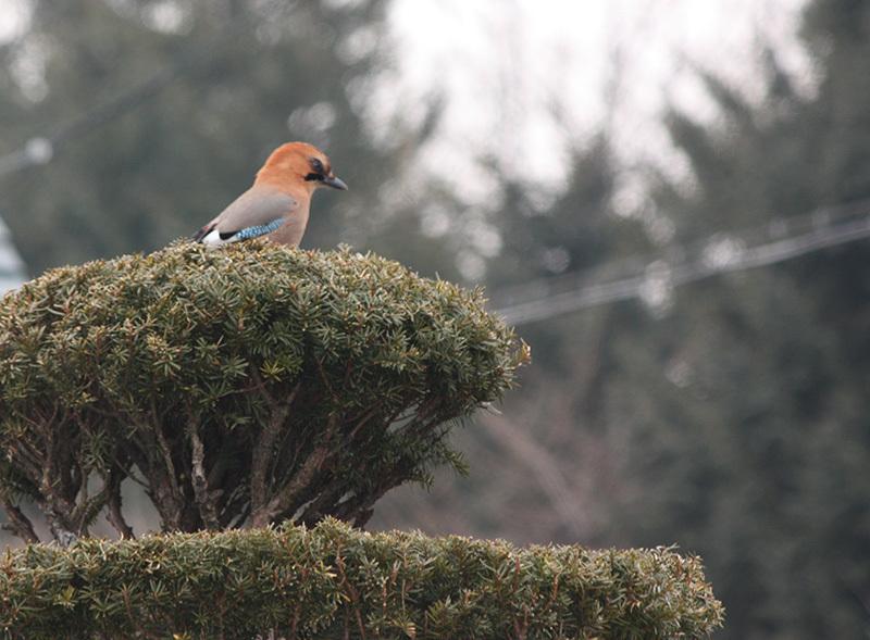 鳥さん達_a0057752_10212936.jpg