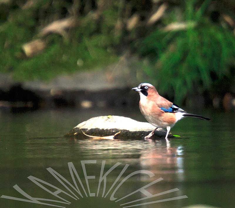 鳥さん達_a0057752_10215316.jpg