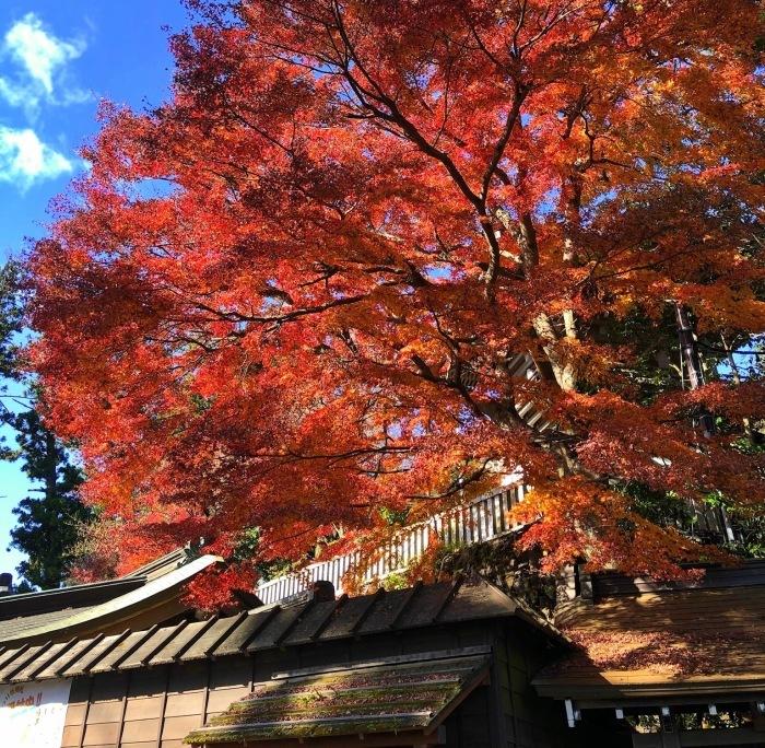 紅葉の高尾山へ🍁_a0092659_17022335.jpg