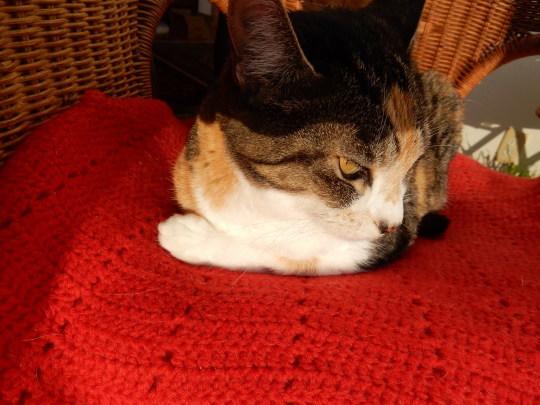 '19,12,5(木)トルコの石灰棚には猫も犬もいないのかな?_f0060461_09281607.jpg