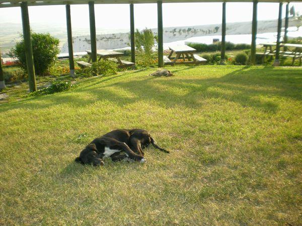 '19,12,5(木)トルコの石灰棚には猫も犬もいないのかな?_f0060461_10030491.jpg