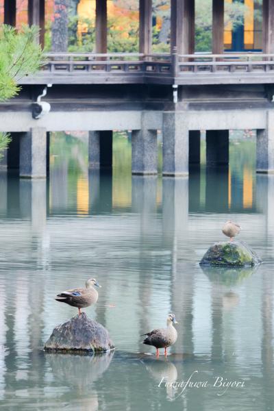 京都 平安神宮**_d0344864_19333020.jpg