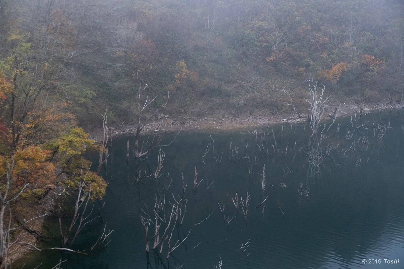 霧の徳山ダム 1_c0350572_23253313.jpg