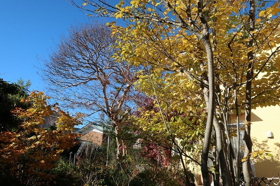 落ち葉の季節_a0107574_18051600.jpg