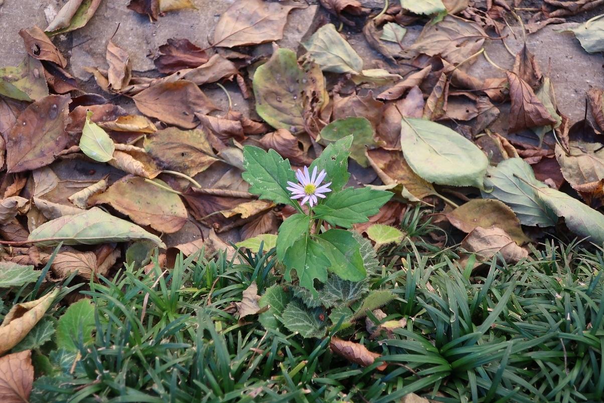 落ち葉の季節_a0107574_18054148.jpg
