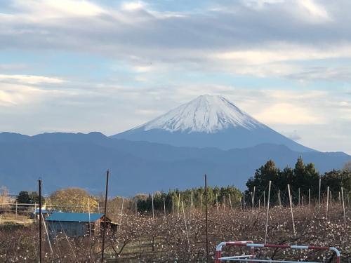 富士山、大きな富士山、この季節だから見られる。_d0338282_16562625.jpg