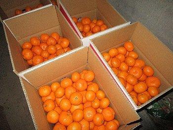 12月4日「大根初収穫」_f0003283_06292666.jpg