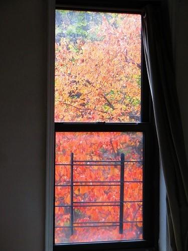 今年の窓景 _b0209691_17140586.jpg