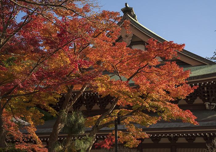 北鎌倉・円覚寺の紅葉が見頃です_b0145398_22432142.jpg