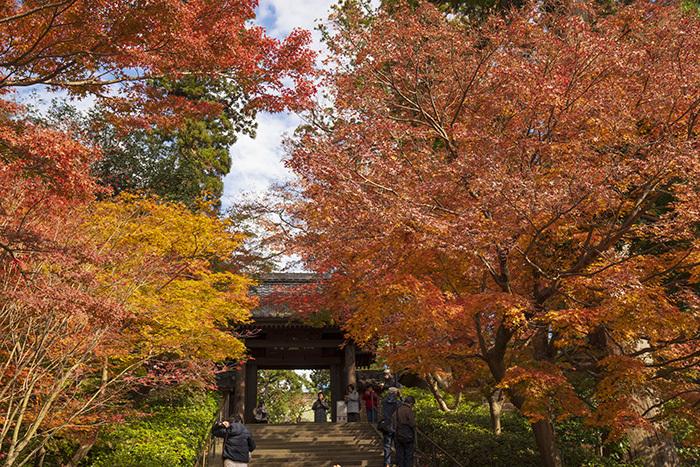 北鎌倉・円覚寺の紅葉が見頃です_b0145398_22442930.jpg