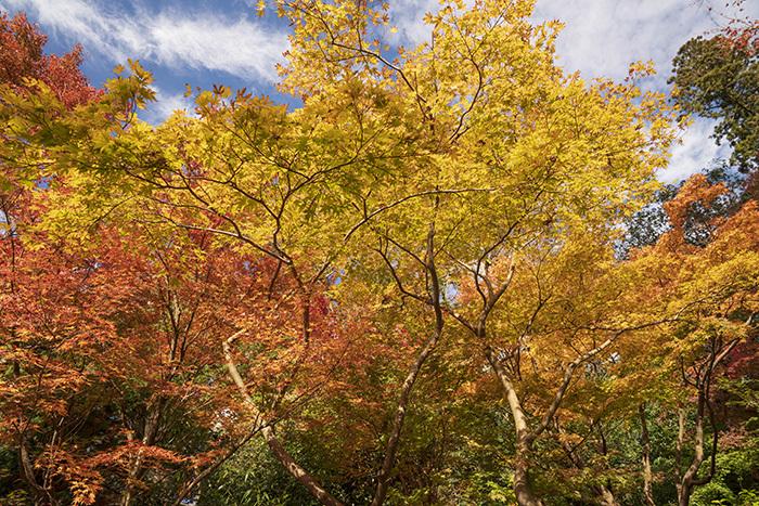 北鎌倉・円覚寺の紅葉が見頃です_b0145398_22452096.jpg