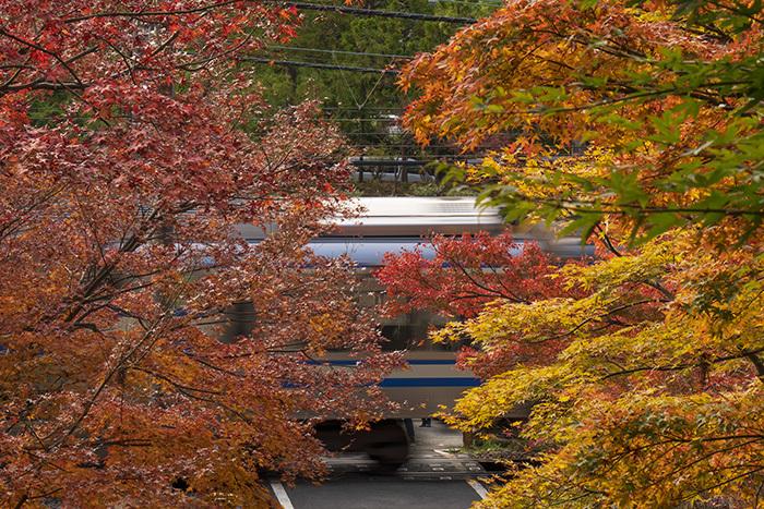北鎌倉・円覚寺の紅葉が見頃です_b0145398_22461862.jpg