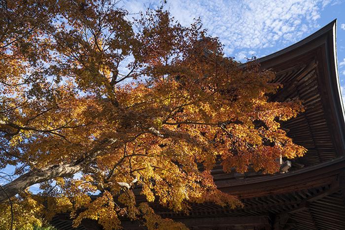 北鎌倉・円覚寺の紅葉が見頃です_b0145398_22471883.jpg