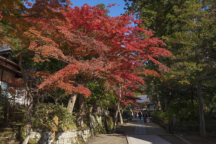北鎌倉・円覚寺の紅葉が見頃です_b0145398_22481158.jpg
