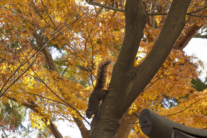 北鎌倉・円覚寺の紅葉が見頃です_b0145398_22482840.jpg