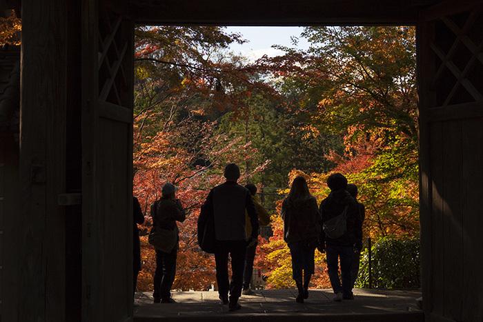 北鎌倉・円覚寺の紅葉が見頃です_b0145398_22485497.jpg