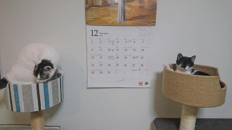 お猫様_a0330799_05094721.jpg