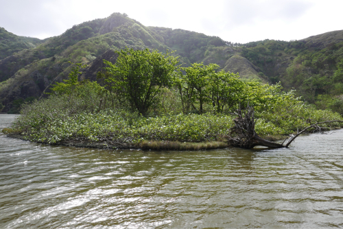 海界村をの歩く 太平洋 父島(東京都)名所編_d0147406_09302417.jpg