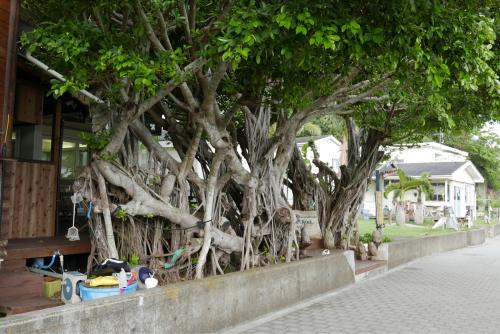海界の村を歩く 太平洋 父島(東京都)集落編_d0147406_20114450.jpg