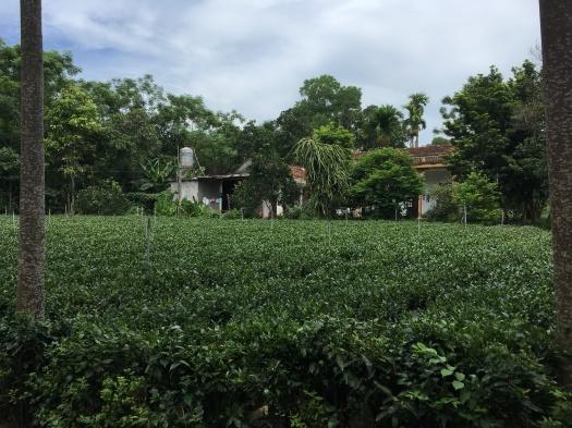 ベトナムハノイを訪問して_a0136514_11585871.jpg