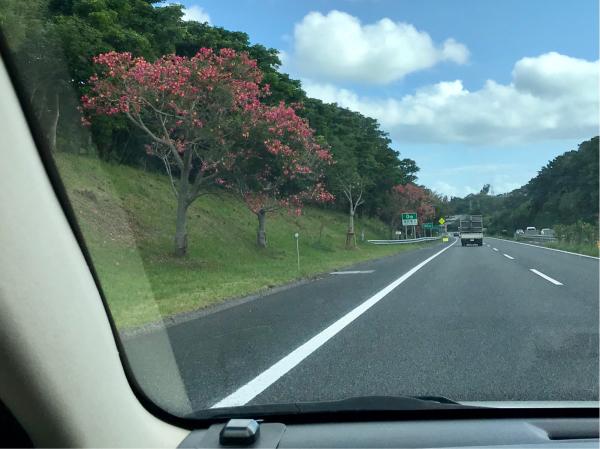 2019 沖縄の旅 3 @ 比地大滝_b0157216_18563737.jpg