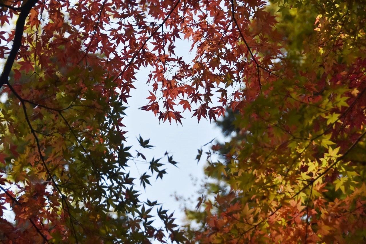 鎌倉紅葉 扇ガ谷_d0065116_20502577.jpg