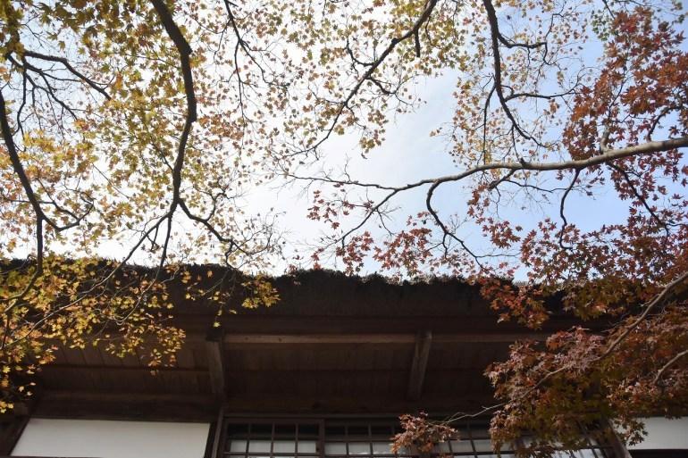 鎌倉紅葉 海蔵寺_d0065116_21484972.jpg