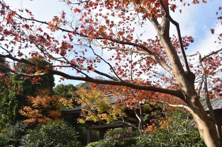 鎌倉紅葉 海蔵寺_d0065116_21540387.jpg