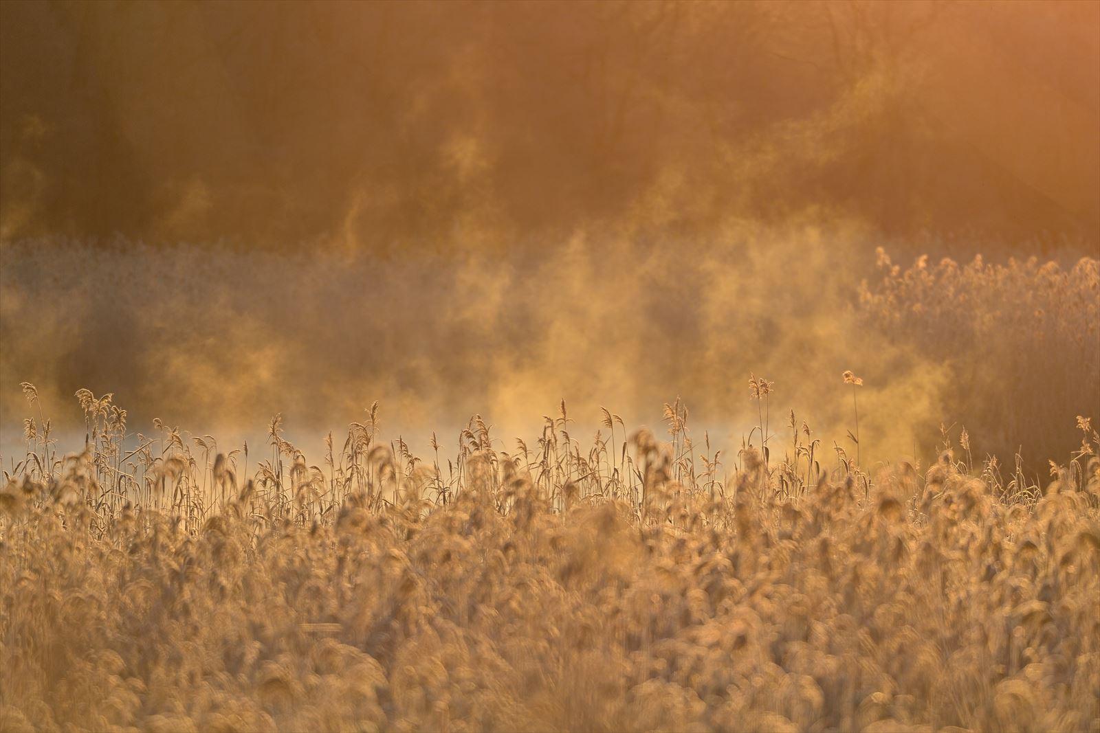 今朝の美沢湿原 2020シーズン・1_a0145819_1274639.jpg