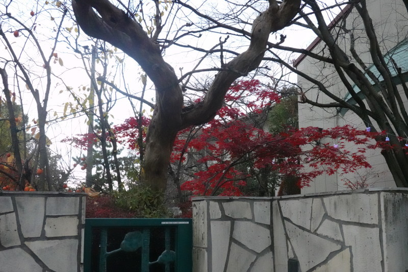 美木多幼稚園晩秋の風景_a0212624_14360000.jpg