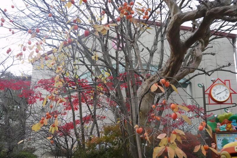 美木多幼稚園晩秋の風景_a0212624_14361755.jpg