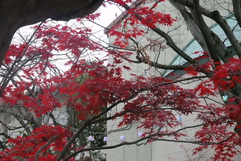 美木多幼稚園晩秋の風景_a0212624_14363286.jpg