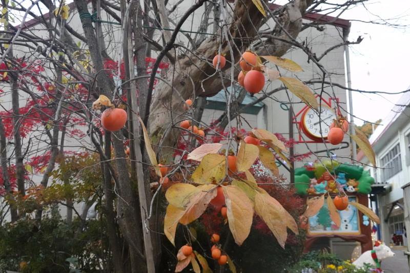 美木多幼稚園晩秋の風景_a0212624_14364231.jpg