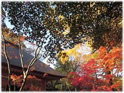 都心の紅葉を求めて、九品仏へ_d0221430_21170212.jpg
