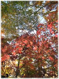 都心の紅葉を求めて、九品仏へ_d0221430_21171527.jpg