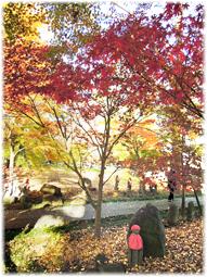 都心の紅葉を求めて、九品仏へ_d0221430_21173215.jpg