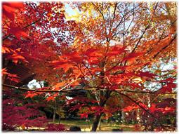 都心の紅葉を求めて、九品仏へ_d0221430_21180066.jpg