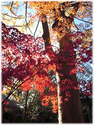 都心の紅葉を求めて、九品仏へ_d0221430_21181548.jpg