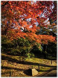 都心の紅葉を求めて、九品仏へ_d0221430_21182864.jpg