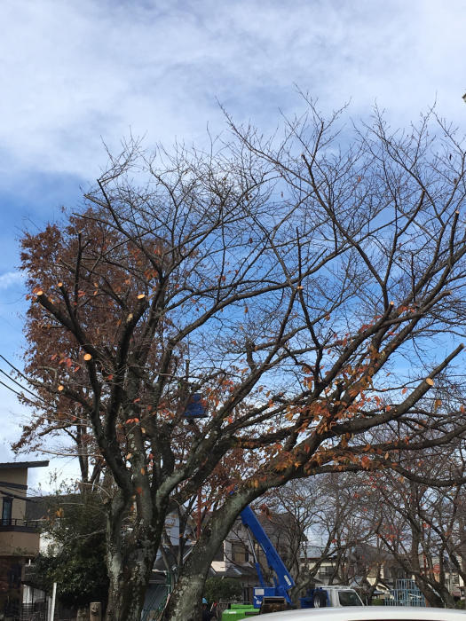 桜🌸とシュレッダー(❓)_f0155431_20410957.jpg