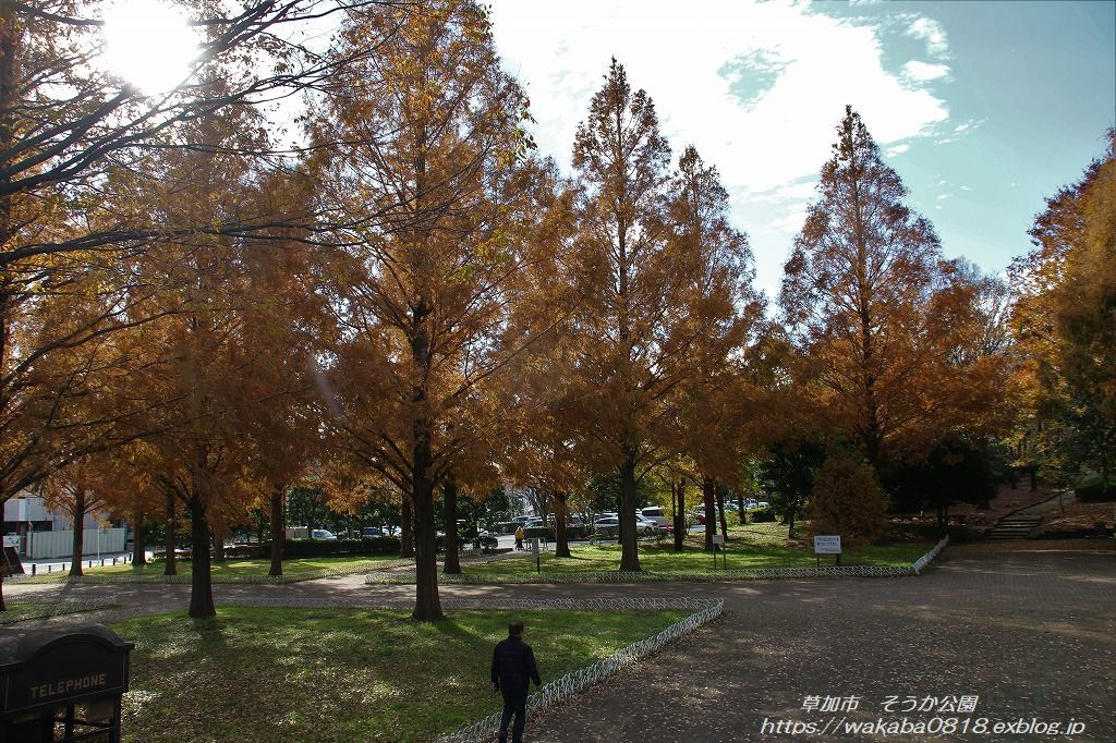 そうか公園の木々が紅葉していました(^^♪_e0052135_14171814.jpg